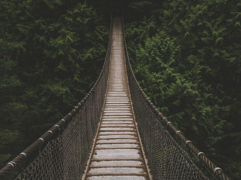 Rope Bridge across a jungle